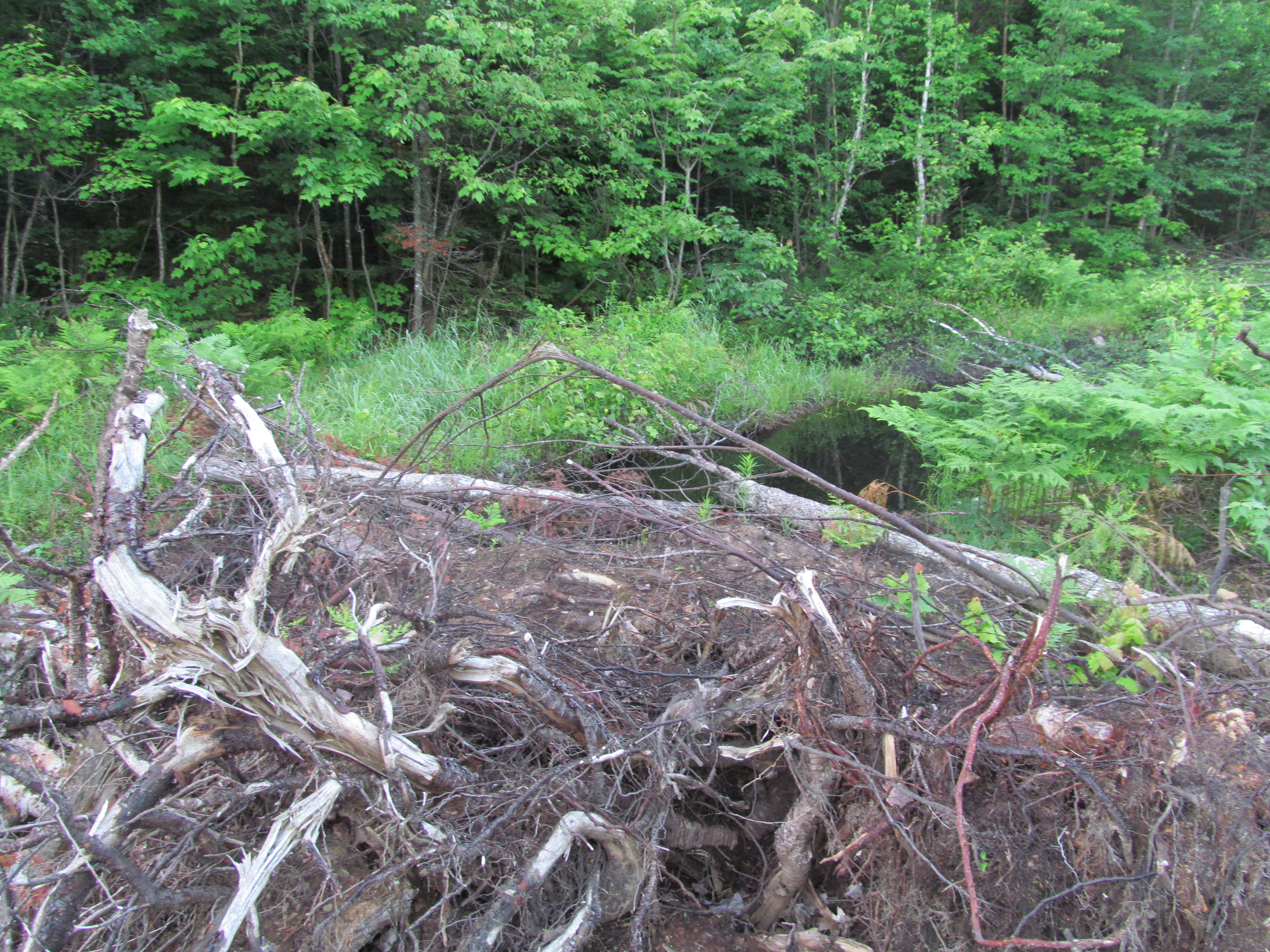 Trees have been pushed directly into the wetlands near Mulligan Creek.