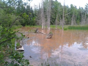 Sediment pollution in the wetland downstream from the spring that has been ruptured.