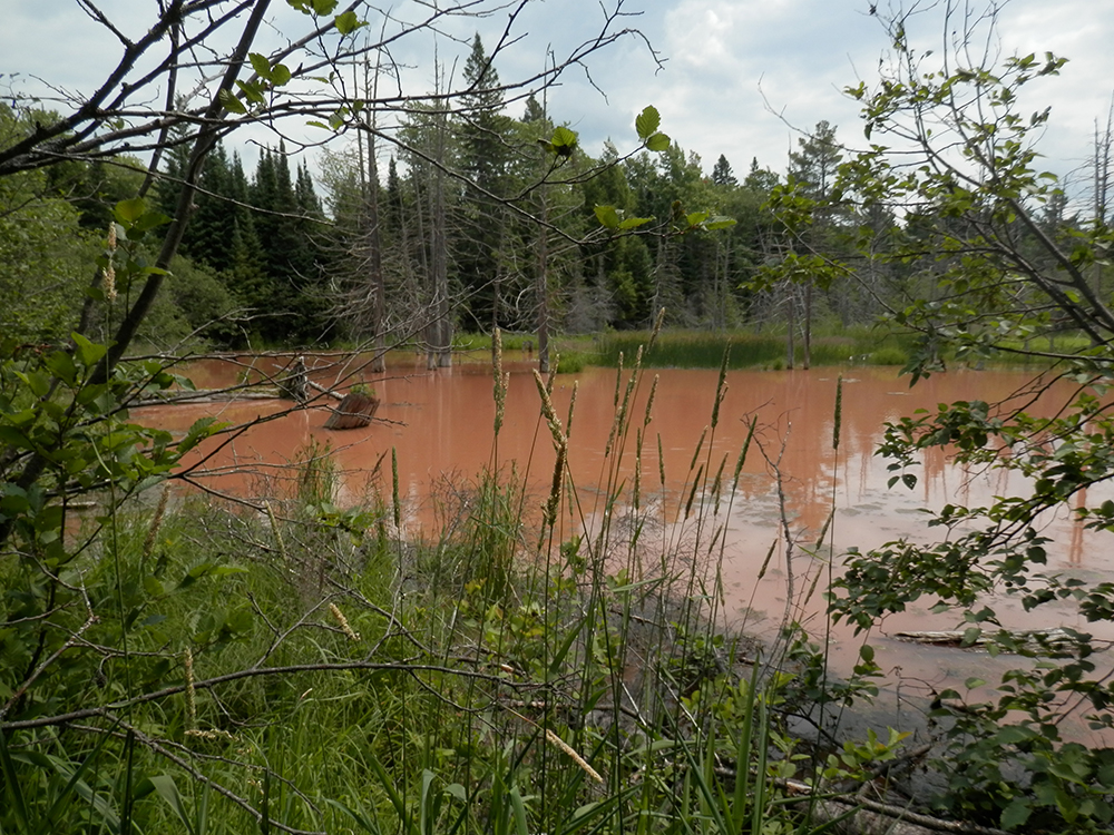 Wetland receiving unlawful sediment deposits and unnatural turbidity as a result of road construction.