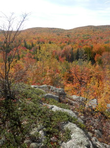 View from atop a granite bedrock glade in the Community Forest